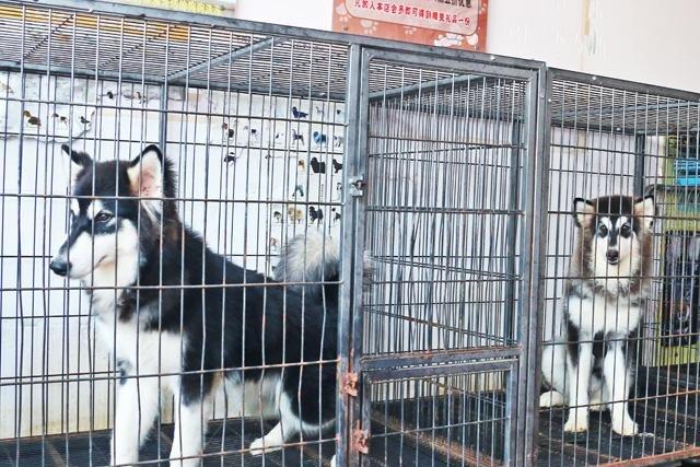 狗狗寄养需要多少钱